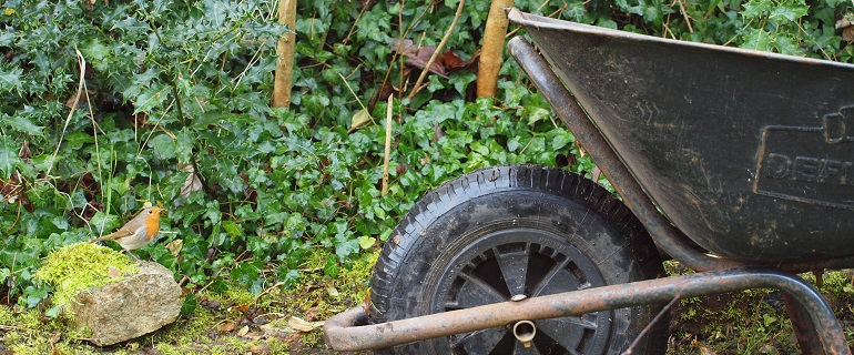 Wheelbarrow & robin