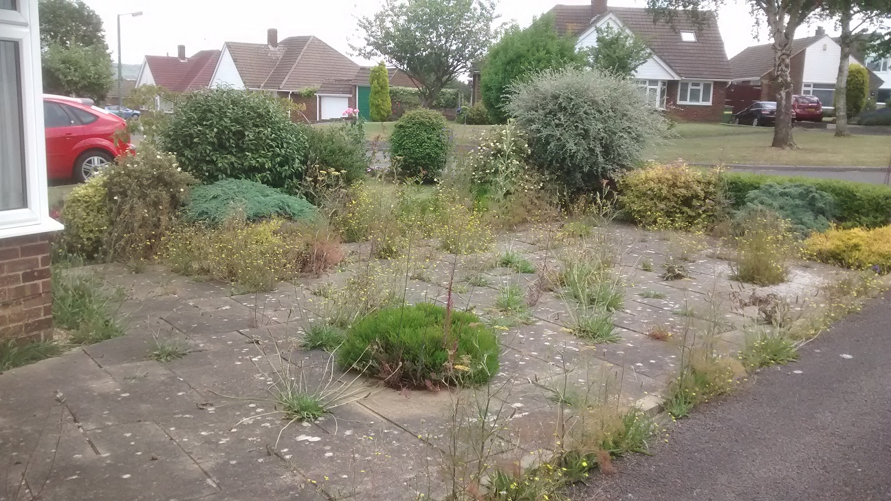 Front garden with weeds before