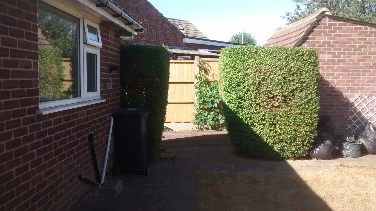 Hedges after hedgecutting