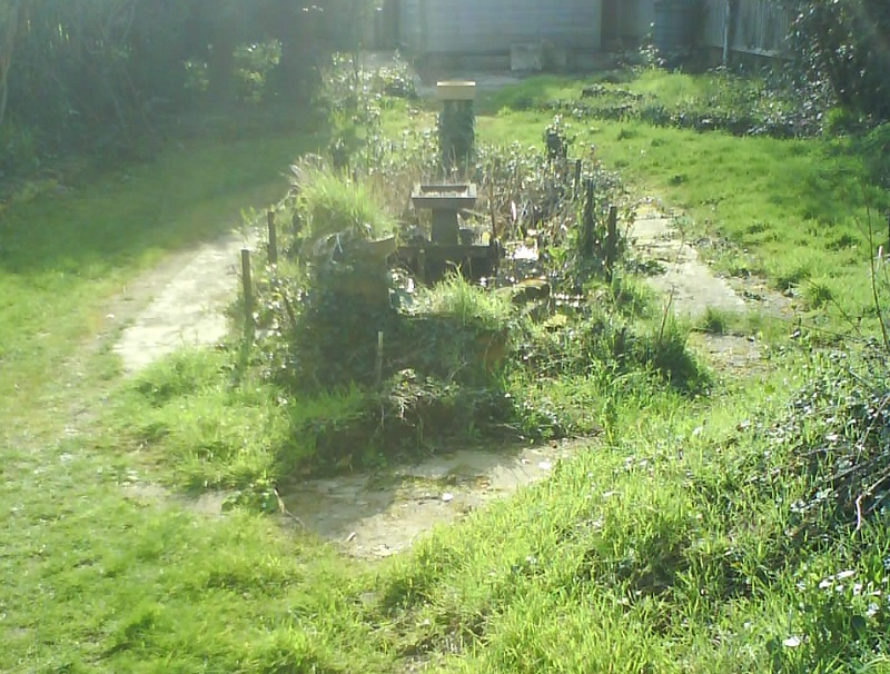 Overgrown pond and paths