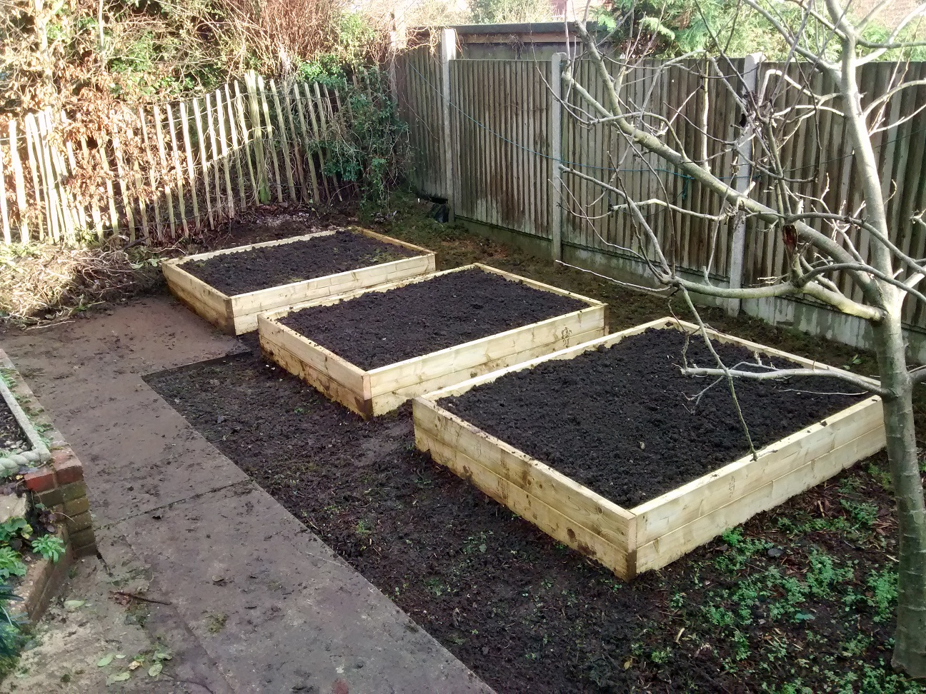 Thrtee raised beds