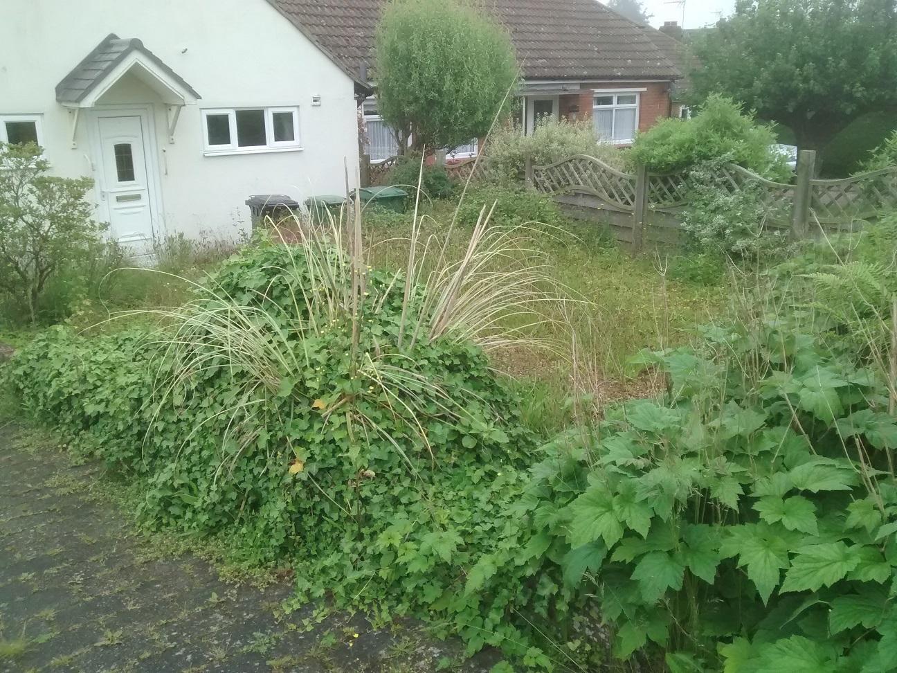 Front garden overgrown
