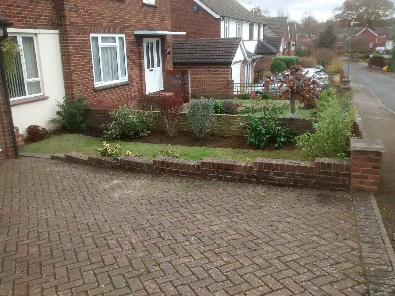 Evergreen shrubs planted in a newly shaped and widened border